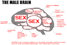 Why do men think about sex